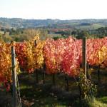 Cantine Adanti - Vigna Rossa
